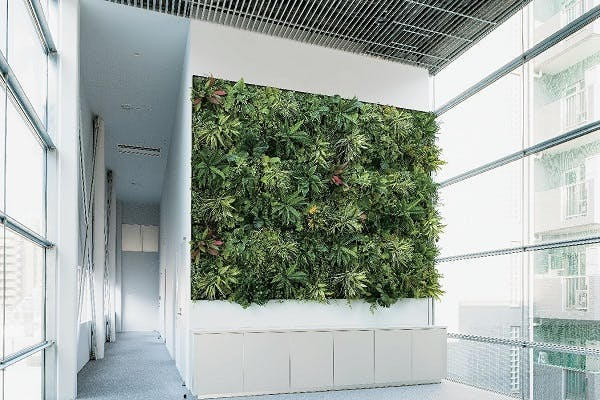 生の植物とのコスト比較(室内壁面緑化の場合)