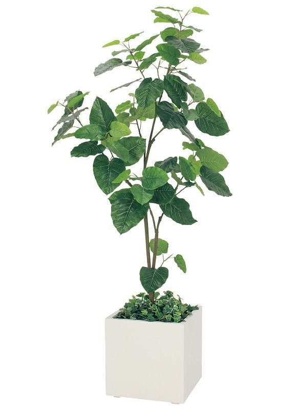 人工樹木ウンベラータ