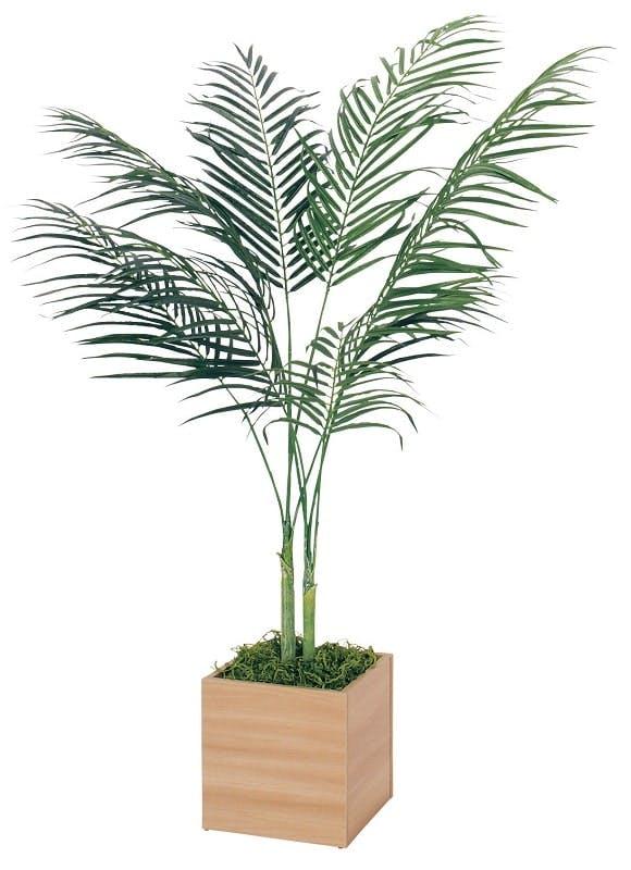 人工樹木アカシア