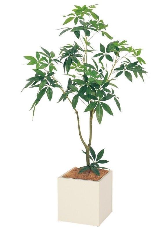 人工樹木パキラ