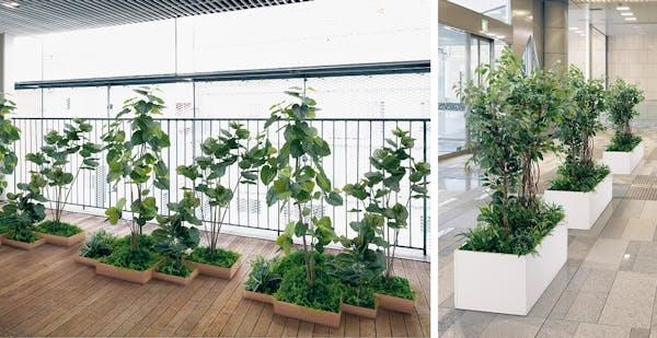人工樹木を使ったグリーン演出特集