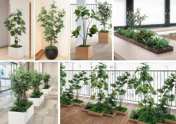 人工観葉植物の種類と選び方