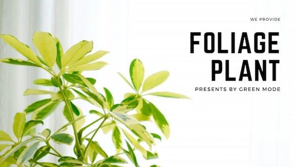 観葉植物が人気の理由とは|グリーンモードおすすめ