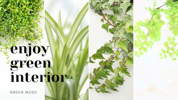 観葉植物をインテリアとしておしゃれに楽しむ|ランキングやおすすめ紹介