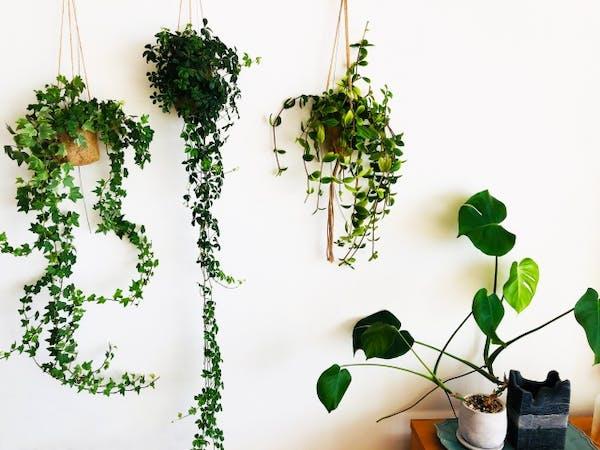 観葉植物の室内での扱い方とは