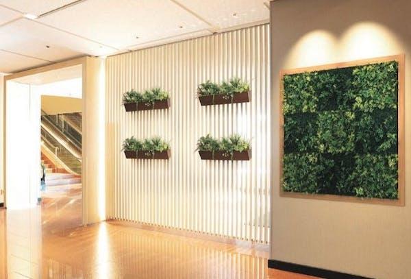 観葉植物で玄関やエントランスをおしゃれに