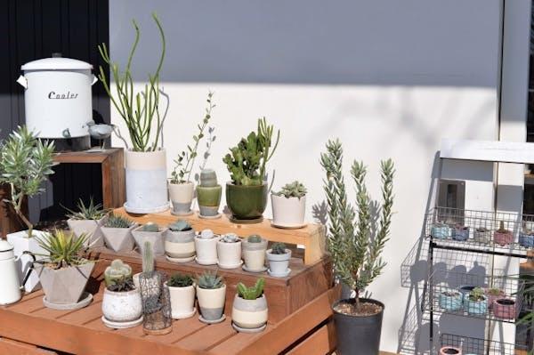 ミニ観葉植物が小さくて可愛くて人気