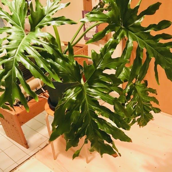 大型の観葉植物でディスプレイ~フェイクグリーン特集~