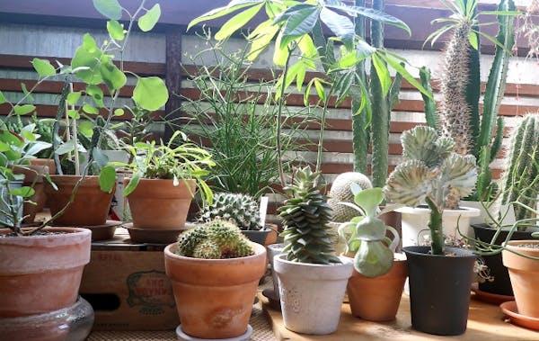 観葉植物とフェイクの比較