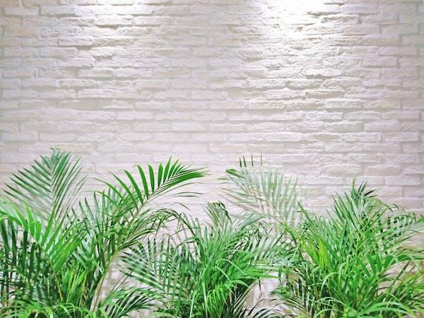 観葉植物のレンタルグリーンについて