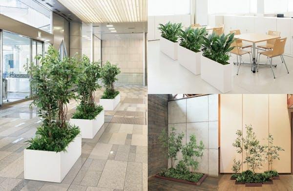 グリーンモード通信【早くも大好評!NEW『人工樹木』の使い方をご紹介します!!】